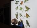 Знакомство с птицами.